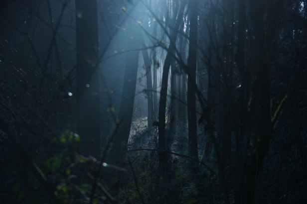 backlit dark dawn environment